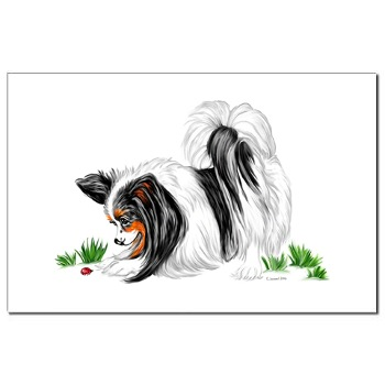 Papillons Mississippi Papillon Puppies For Sale Mississippi