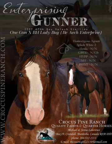 Click Here for 2017 expected Gunner Foals