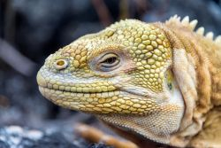 Biological Evolution of the Galapagos