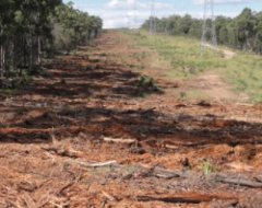 Timber Clearing and Land Rehabilitation