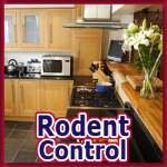 Alternative Pest Control - Rodent Control